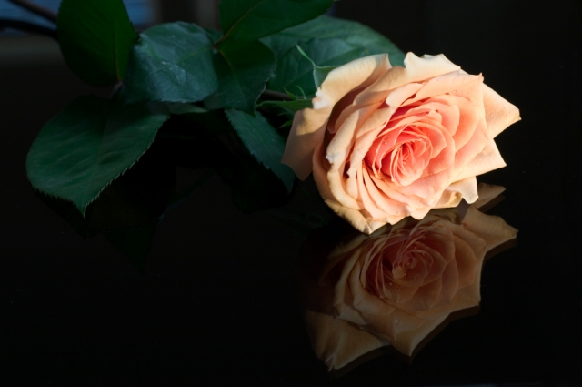 reflected rose