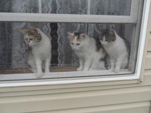 Three Cats 01