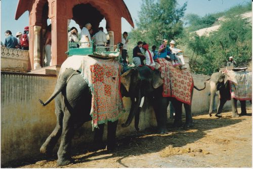 India - Jaipur_Elephant ride