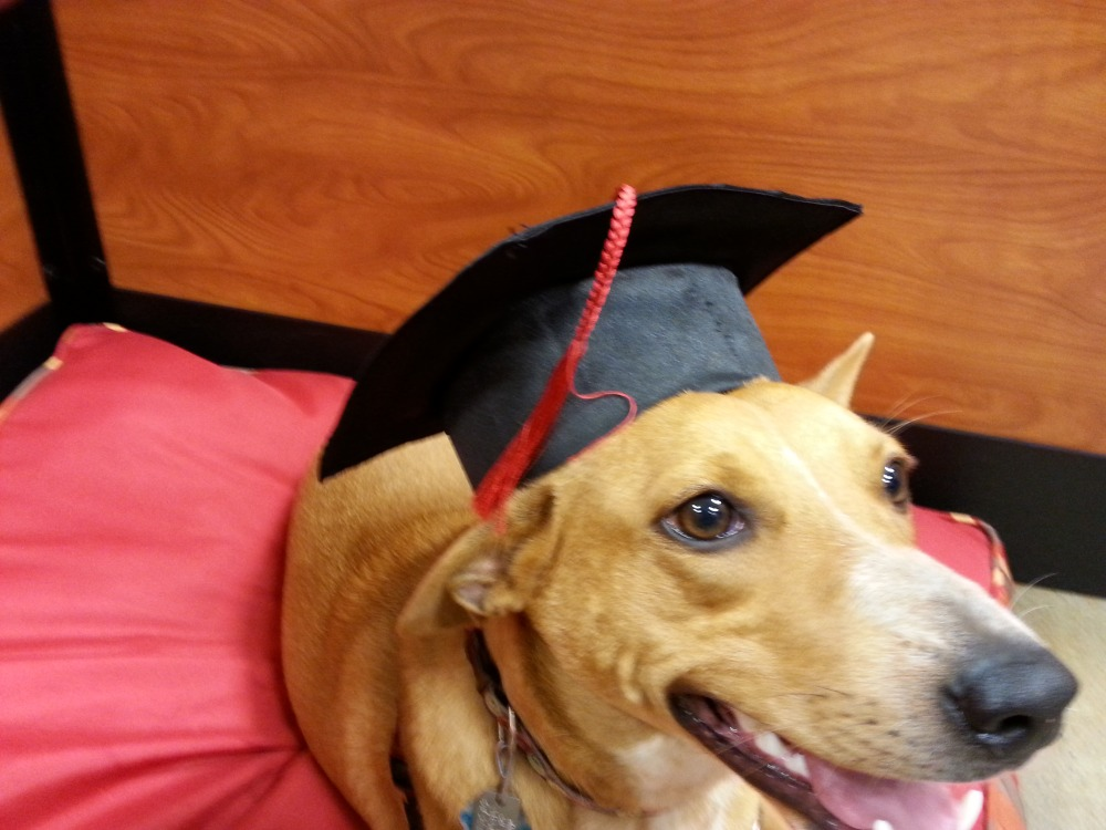 Gerri Bowen: Dog Graduation, Smart Phones, and This and That (2/6)